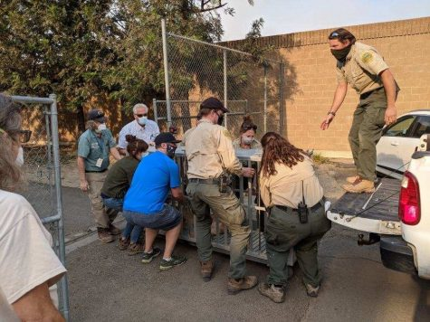 Photo Courtesy of: City of Santa Ana Zoo staff carrying animals from the Orange County Zoo.